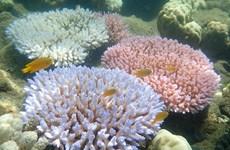 """Australia lắp """"mắt thần"""" bảo vệ rạn san hô lớn nhất thế giới"""