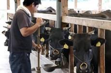 Mỹ nhất trí tăng hạn ngạch nhập khẩu thịt bò Nhật Bản