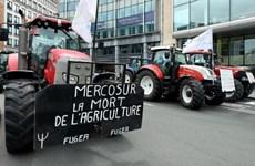 Quốc hội Áo bác bỏ Hiệp định thương mại tự do EU-Mercosur