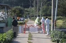 Hàn Quốc dỡ lệnh cấm di chuyển đối với các trang trại lợn