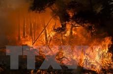 Mỹ: Xuất hiện đám cháy rừng mới và khó kiểm soát tại bang California