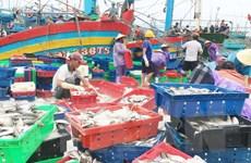 Nghệ An giá hải sản tăng 20% do gió mùa Đông Bắc và mưa bão