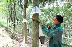 Tăng sức cạnh tranh cho ngành công nghiệp cao su Việt Nam