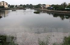 Quảng Trị: Hàng chục nghìn con cá rô phi chết phủ trắng mặt hồ Đại An