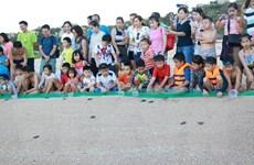 Cứu hộ, thả hơn 1.530 cá thể rùa quý hiếm về biển an toàn