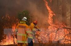 Australia: Cháy rừng gây ô nhiễm không khí đáng báo động ở Brisbane