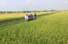 Xây dựng thương hiệu gạo Việt Nam: Nâng vị thế, tăng giá trị