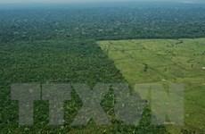 Brazil và Đức hợp tác sản xuất bền vững tại vùng rừng nhiệt đới Amazon