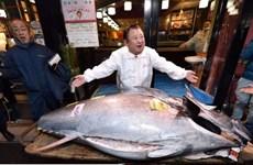 Cá ngừ 1,8 triệu USD được bán trong phiên đấu giá đầu năm mới ở Nhật