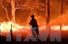 Khói mù tại New Zealand do ảnh hưởng cháy rừng ở Australia
