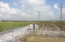 Xây dựng thể chế chính sách thúc đẩy thị trường đất nông nghiệp
