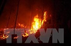 Quảng Ninh: Làm rõ nguyên nhân cháy rừng thông tại Đông Triều