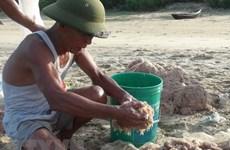 Mỗi ngày ngư dân Quảng Bình thu nhập 5-10 triệu đồng từ ruốc biển