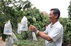 Gắn kết sản xuất và tiêu thụ sản phẩm trái cây ở Tiền Giang