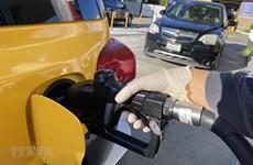 Giá dầu nối dài đà tăng trên thị trường châu Á trong phiên chiều 24/4