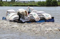 Tin vui cho doanh nghiệp xuất khẩu cá tra, basa thời hậu COVID-19