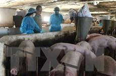 Đồng Nai: Đặc biệt chú ý an toàn sinh học trong tái đàn lợn sau dịch