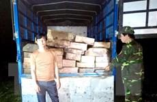 Thừa Thiên-Huế: Phát hiện xe tải vận chuyển gỗ trái phép