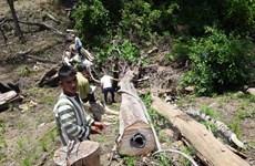 Bắt khẩn cấp 7 đối tượng liên quan đến vụ phá rừng tại huyện Kbang
