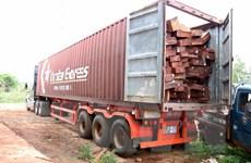 Gia Lai: Phát hiện vụ vận chuyển, tàng trữ gỗ trái phép quy mô lớn