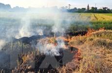Kiểm soát chặt việc đốt rơm rạ, chất thải rắn không đúng quy định
