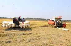 Thị trường nông sản tuần qua: Giá càphê, tiêu bật tăng trở lại