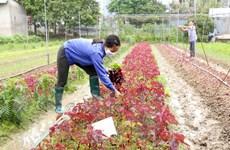 Hà Nội dự kiến mở rộng thêm từ 3.000-4.000ha sản xuất rau an toàn