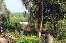 Kỷ luật cán bộ vụ phá rừng ở Khu Bảo tồn thiên nhiên văn hóa Đồng Nai