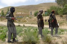 Afghanistan và Mỹ hoan nghênh tuyên bố ngừng bắn của Taliban