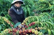 Giá trị xuất khẩu nhiều sản phẩm cây công nghiệp giảm mạnh