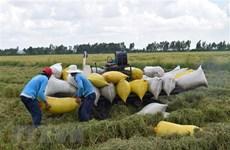 Thị trường nông sản tuần qua: Giá nhiều nông sản tiếp tục tăng nhẹ