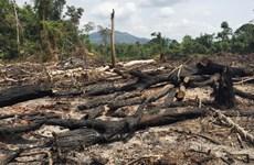 Gia Lai: Khởi tố hai bị can liên quan vụ để mất hơn 360ha rừng