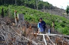 Vụ phá rừng tại Phú Yên: Kiểm tra thực tế, làm rõ trách nhiệm cán bộ