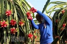 Mở rộng diện tích và đối tượng ứng dụng nông nghiệp công nghệ cao