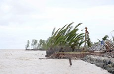 Cà Mau xuất hiện 4 đoạn sạt lở đê biển rất nguy hiểm