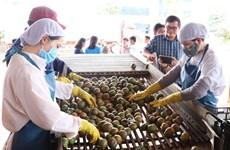 Xuất khẩu rau quả 9 tháng qua đạt gần 2,5 tỷ USD, giảm 11%