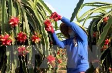 Tìm giải pháp đẩy mạnh xuất khẩu rau quả vào thị trường Trung Quốc