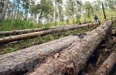 Vụ phá rừng phòng hộ ở Lâm Đồng: Đôn đốc điều tra làm rõ