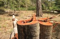 Yêu cầu xác minh thông tin TTXVN phản ánh về phá rừng ở Lâm Đồng