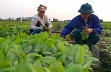 Gần 100% số xã hoàn thành phê duyệt quy hoạch xây dựng nông thôn mới