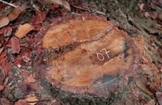 """Kiểm tra, xác minh việc lõi rừng đặc dụng Mường Phăng bị """"rút ruột"""""""