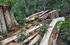 Điều tra, xử lý nghiêm đối tượng phá rừng ở Khu bảo tồn thiên Ea Sô
