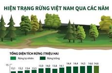 [Infographics] Hiện trạng rừng Việt Nam qua các năm