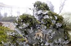 Băng giá, mưa tuyết phủ trắng diện rộng nhiều vùng núi cao phía Bắc
