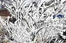 Sơn La: Xuất hiện băng giá ở các xã vùng cao huyện Bắc Yên
