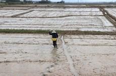 Dòng chảy ở mức tốt để lấy nước gieo cấy vụ Đông Xuân