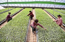 Trung Quốc: Giá thực phẩm tại Bắc Kinh tăng cao dịp năm mới Âm lịch
