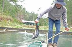 Kiểm soát nhập khẩu cá tầm thương phẩm dùng làm thực phẩm