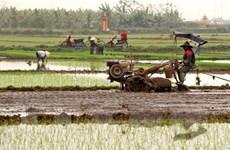 Gần 71% diện tích đã có nước cho gieo cấy vụ Đông Xuân