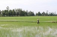 Gần 76% diện tích đã có nước cho gieo cấy vụ Đông Xuân